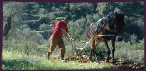 zaytoun-farmer