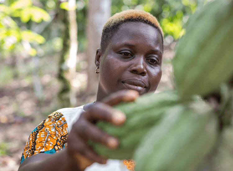 Rosine with cocoa pods